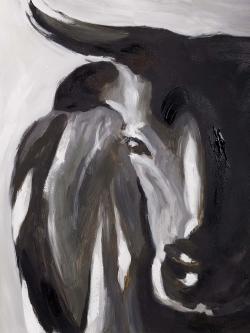 Bull head closeup