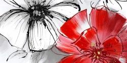Red & white flowers sketch
