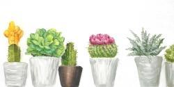 Mini cactus and succulents