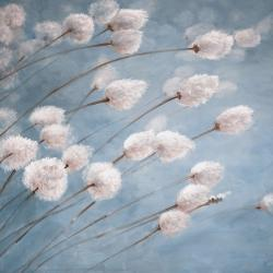 Delicate cotton flowers