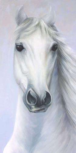 Powerful white horse
