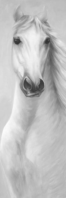 Monochrome mighty white horse