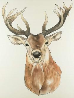 Front deer portrait