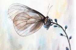 Butterfly on blue flowers