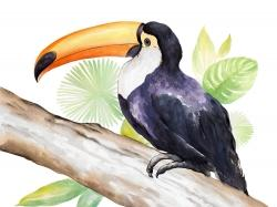Toucan perched