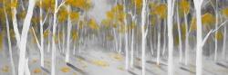 Yellow birch forest
