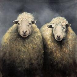 Wool sheeps