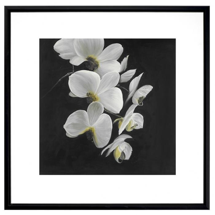 Magnifiques orchidées