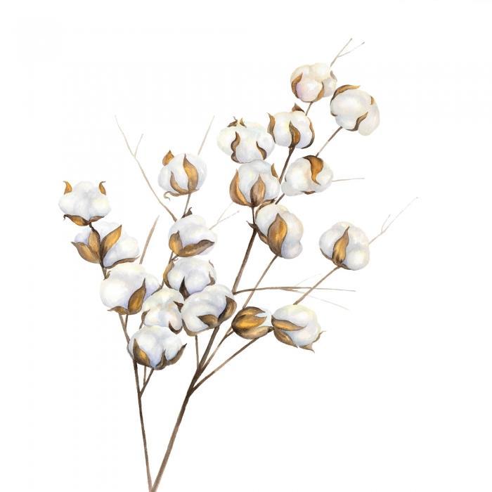 Une branche de fleurs de coton