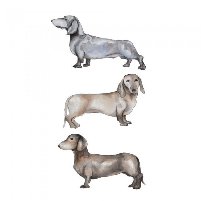 Petits chiens teckel