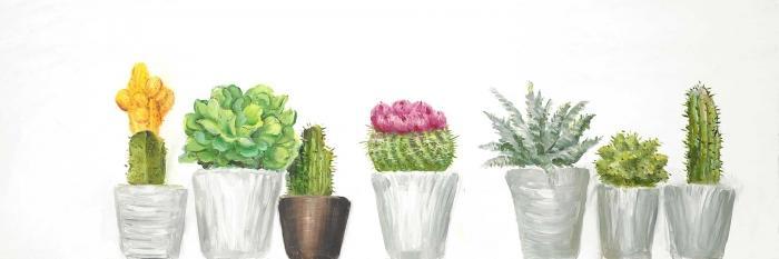 Mini cactus et succulents