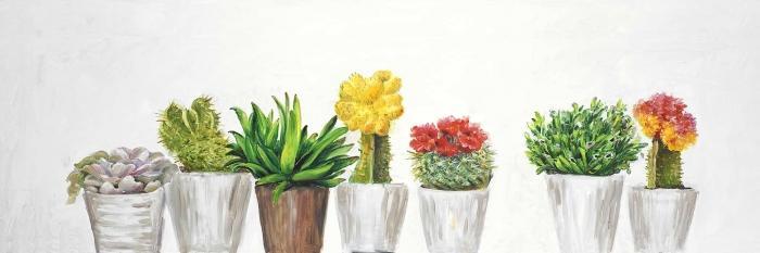 Petit pots cactus et succulents