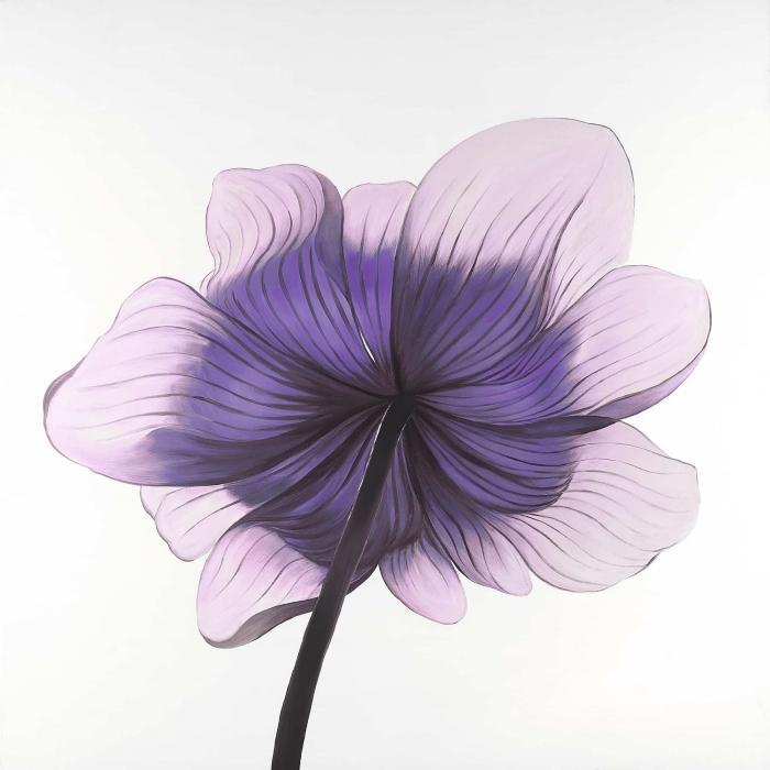 Belle fleur anémone mauve