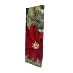 Canvas 16 x 48 - 3D - Echinopsis red cactus flower