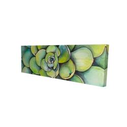 Canvas 16 x 48 - 3D - Watercolor succulent plant