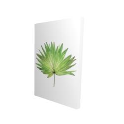 Canvas 24 x 36 - 3D - Petticoat palm