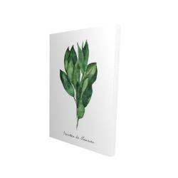 Canvas 24 x 36 - 3D -  bay leaves bundle - fr