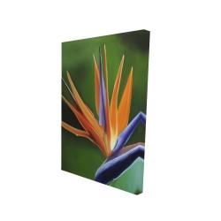 Canvas 24 x 36 - 3D - Bird of paradise flower