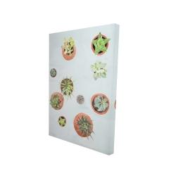 Canvas 24 x 36 - 3D - Cactus plants
