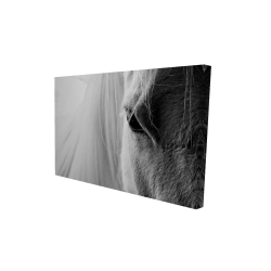 Canvas 24 x 36 - 3D - The white horse eye