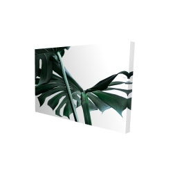 Canvas 24 x 36 - 3D - Monstera deliciosa