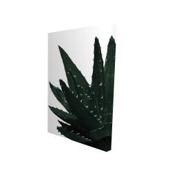 Canvas 24 x 36 - 3D - Aloe plant