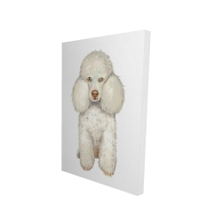 Canvas 24 x 36 - 3D - French poodle