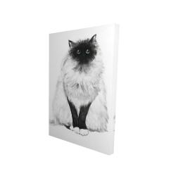 Canvas 24 x 36 - 3D - Blue eyes fluffy siamese cat