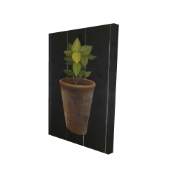 Canvas 24 x 36 - 3D - Plant of bay leaves