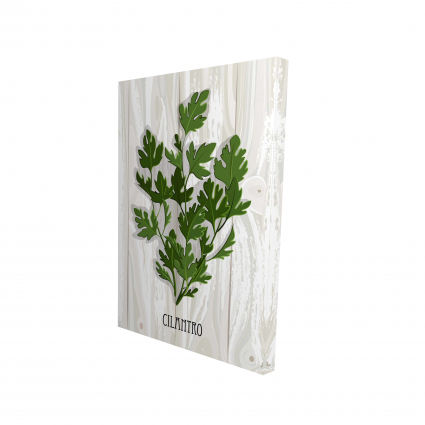 Cilantro on wood