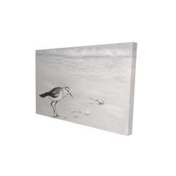 Canvas 24 x 36 - 3D - Semipalmated sandpiper