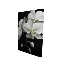 Canvas 24 x 36 - 3D - White orchids