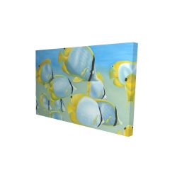 Canvas 24 x 36 - 3D - Butterfly fishes