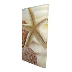 Canvas 24 x 48 - 3D - Starfish and seashells at the beach