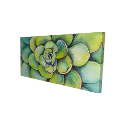 Canvas 24 x 48 - 3D - Watercolor succulent plant