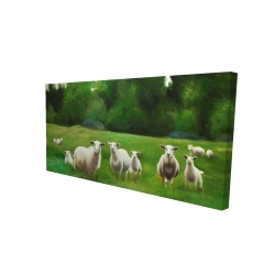 Canvas 24 x 48 - 3D - Fields of sheep