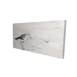 Canvas 24 x 48 - 3D - Semipalmated sandpiper