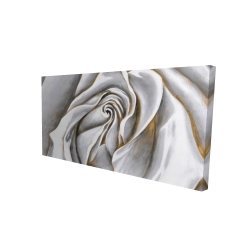 Canvas 24 x 48 - 3D - White rose delicate