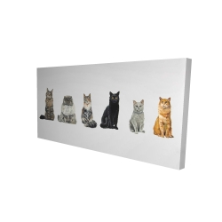 Canvas 24 x 48 - 3D - Six cats lined up