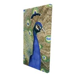 Canvas 24 x 48 - 3D - Peacock