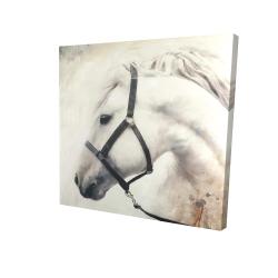 Canvas 24 x 24 - 3D - Darius the white horse