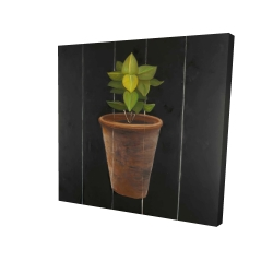 Canvas 24 x 24 - 3D - Plant of bay leaves