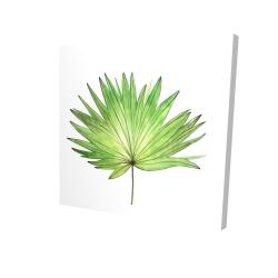 Canvas 24 x 24 - 3D - Petticoat palm