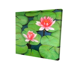 Canvas 24 x 24 - 3D - Lotus flowers in a swamp