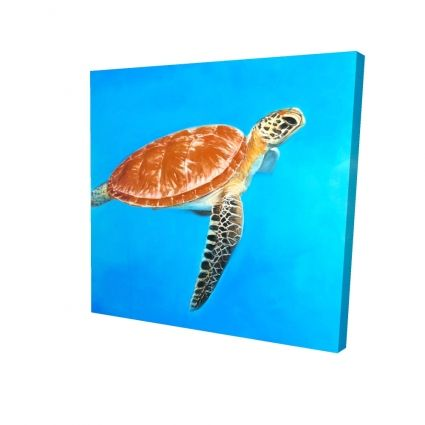 Green aquatic turtle