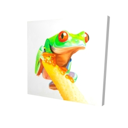 Curious red-eyed frog