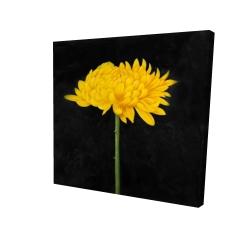 Canvas 24 x 24 - 3D - Chrysanthemum