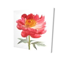 Canvas 24 x 24 - 3D - Pink peony