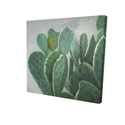 Paddle cactus