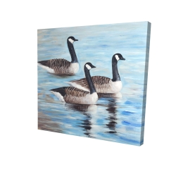 Canvas 24 x 24 - 3D - Canada geese in water